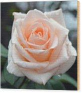 Peachy Rose Wood Print