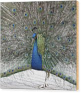 Peacock 03 Wood Print