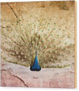 Peacock Bird Textured Background Wood Print