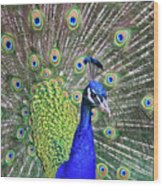 Peacock Colors Wood Print