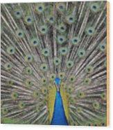 Peacock Display Wood Print
