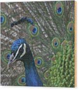 Peacock Enhanced Wood Print