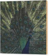 Peacock Eyes Wood Print
