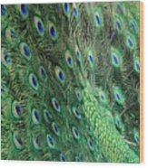Peacock Feather Pattern Wood Print