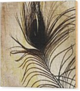 Peacock Feather Silhouette Wood Print