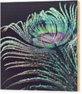 Peacock Feather With Dark Background Wood Print