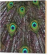 Peacock Feathers Upside Down Wood Print