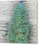 Peacock Fluffy Tail Color Sketch Wood Print