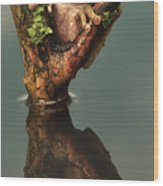 Peacock Frog Wood Print