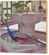 Peacock - Havana Cuba Wood Print