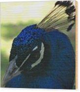Peacock Head Wood Print
