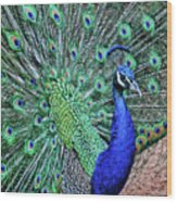 Peacock In A Oak Glen Autumn 2 Wood Print