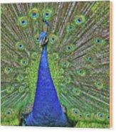 Peacock In A Oak Glen Autumn 3 Wood Print