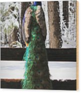 Peacock In The Snow Wood Print