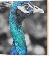 Peacock Luminance Wood Print