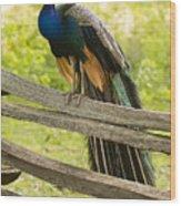 Peacock On Fence Wood Print