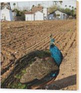 Peacock On The Farm Wood Print