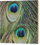 Peacock Pavo Cristatus Feather Detail Wood Print