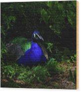 Peacock Peafowl Wood Print