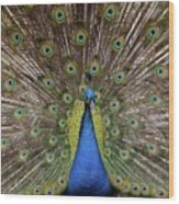 Peacock Plumage Wood Print