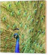 Peacock Prancing Wood Print