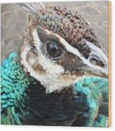 Peacocks Eye View Wood Print