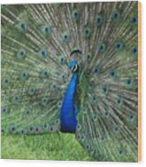 Peacocks Glory Wood Print