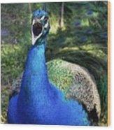 Peacocks Squawk Wood Print