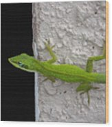 Peaking Lizard Wood Print