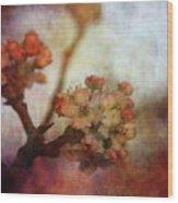 Pear Blossom Sunset 8930 Idp_2 Wood Print