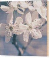 Pear Blossoms 4 Wood Print