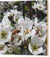 Pear Blossoms And Bee Wood Print