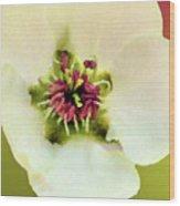Pear Petals Wood Print