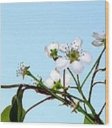 Pear Tree Blossoms 4 Wood Print