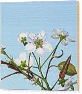 Pear Tree Blossoms 6 Wood Print