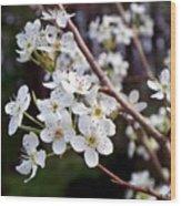 Pear Tree Blossoms IIi Wood Print