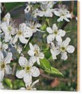 Pear Tree Blossoms Iv Wood Print