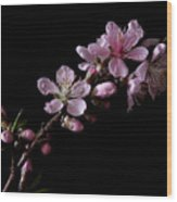 Peach Tree Blossum Wood Print