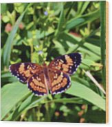 Pearl Crescent Butterfly Wood Print