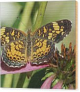 Pearl Crescent Butterfly On Coneflower Wood Print