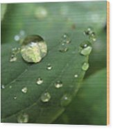 Pearls On Leaf 5 Wood Print