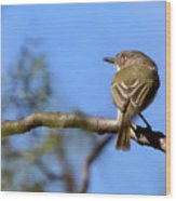 Pearly-vented Tody-tyrant Wood Print