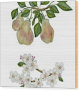 Pears And Pear Blossoms Wood Print