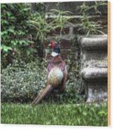 Peasant Pheasant Wood Print