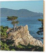 Pebble Beach Iconic Tree With Sun Light At Dusk Wood Print