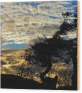 Pebbles Beach Pine Tree Wood Print