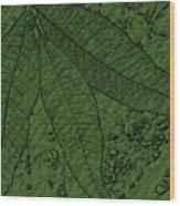 Pecan Tree Leaves Wood Print