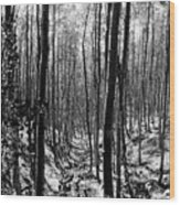 Pecos Wilderness Wood Print