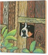 Peek-a-boo Fence Wood Print