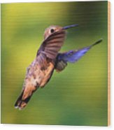 Peek-a-boo Hummingbird Wood Print